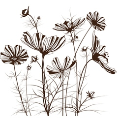 garden flowers Cosmos bipinnatus vector image