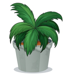 A pot with a green leafy plant vector image