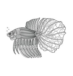 fighting fish hand drawn coloring page vector image