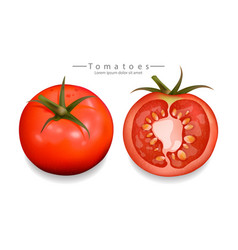 tomatoes sliced isolated realistic vector image