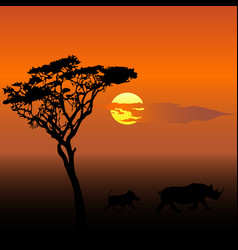 wild boars at sunset vector image