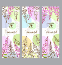 herbal tea collection fireweed vector image
