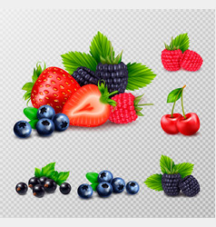 berries and leaves set vector image