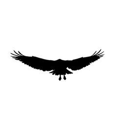 Falcon hawk eagle or orel black silhouette vector