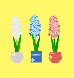 Hyacinth - spring flowers in a vase vector