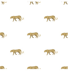 Leopardafrican safari single icon in cartoon vector