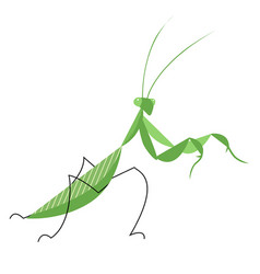 Mantis in an attacking pose vector