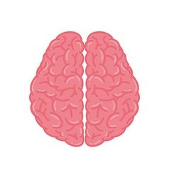 Pink Human Brain vector image