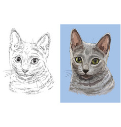 portrait cute russian blue cat vector image