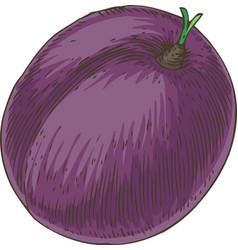 Ripe purple plum vector