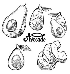 Set of avocado on white background design vector