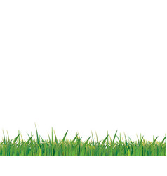green grass on white background vector image vector image