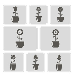 monochrome icons with flowers in the pots vector image vector image