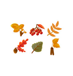 collection bright colorful autumn leaves vector image