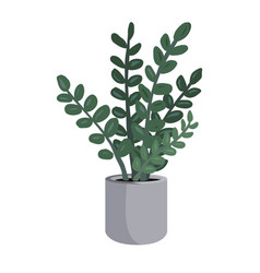 potted zamioculcas or zz plant vector image