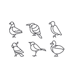 set of birds in linear style pigeon vector image