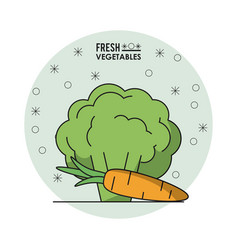 colorful poster of fresh vegetables with vector image