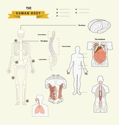 Human Body Anatomy vector image vector image