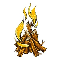 Flame fire of campfire with vector image vector image