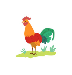 Colorful cartoon rooster standing on green grass vector
