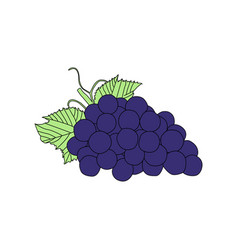 Flat grape eps 10 vector