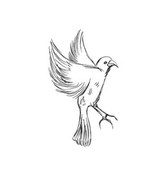 freedom concept hand drawn pigeon flying out of vector image