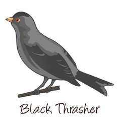 brown trasher color vector image vector image
