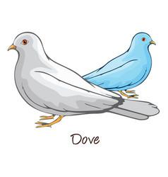 Dove color vector