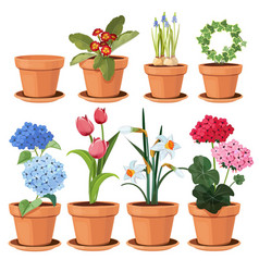 flowers pot decorative colored plants grow at vector image