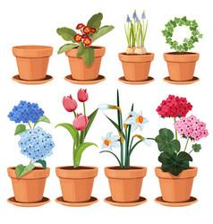 Flowers pot decorative colored plants grow vector