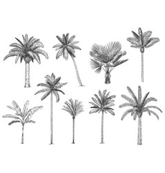 Hand drawn tropical palm trees set vector