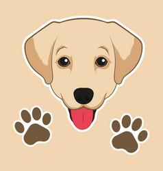 Image dog labrador on white background vector