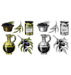 Set of olive oil and branch of trees organic vector