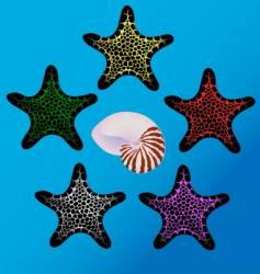 starfish and sea shell vector image