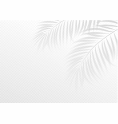 the transparent shadow overlay effect tropic leaf vector image