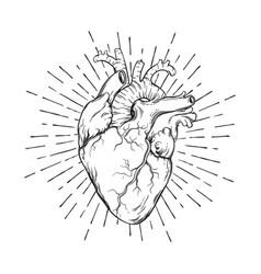 hand drawn human heart with sunburst vector image
