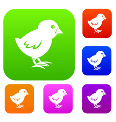 chick set color collection vector image