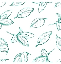 Eco peppermint tea fresh mint leaves menthol vector