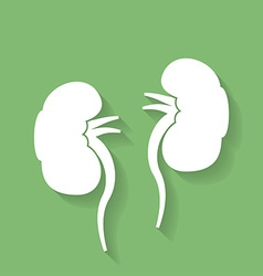Icon of human kidneys Flat style vector image