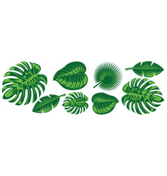 set various tropical leaves design elements vector image