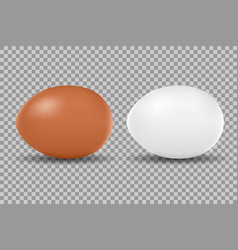 two realistic chicken white and brown eggs vector image