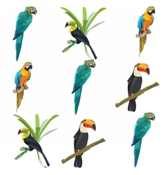 Parrots set collection vector image vector image