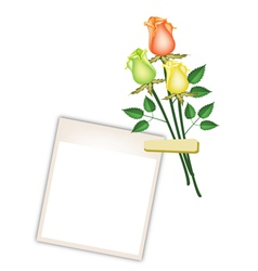 Three Beautiful Roses with Blank Photo Frames vector image vector image