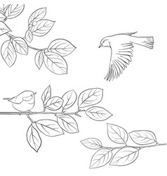 bird at tree branch vector image