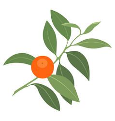 Branch mandarin vector