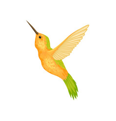 Hummingbird i with bright plumage vector