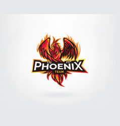 phoenix mascot character logo design vector image