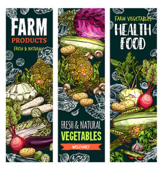 Sketch banners of natural farm vegetables vector