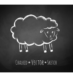 Chalkboard drawing of sheep vector image vector image