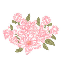 hand drawn magnolia flowers isolated on white vector image vector image